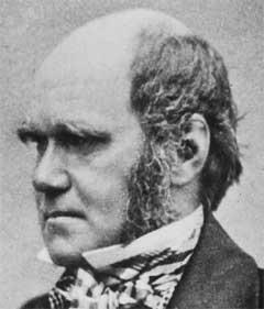darwin evolutionstheorie kurz