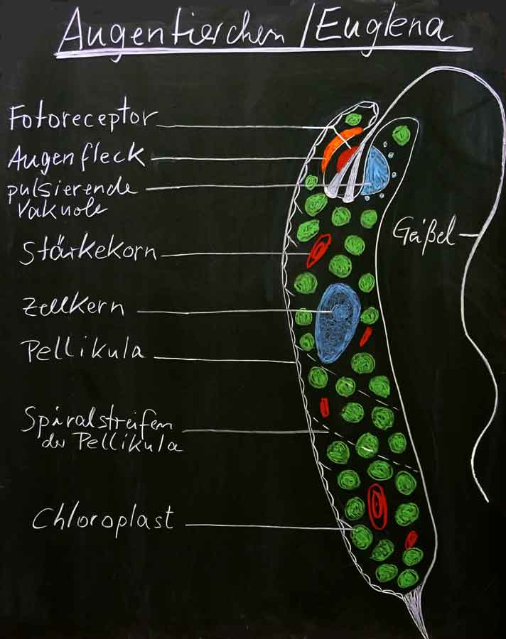 Biologie & Chemie